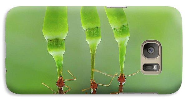 Ant Galaxy S7 Case - Chili Cilider Team by Yahya Taufikurrahman