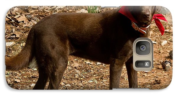 Galaxy Case featuring the photograph Chocolate Lab by Robert L Jackson