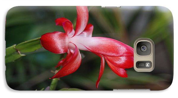 Galaxy Case featuring the photograph Christmas Cactus by Mark McReynolds