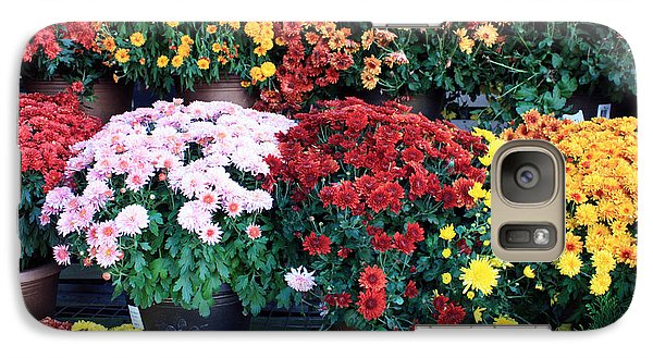 Galaxy Case featuring the photograph Chrysanthemums by Gerry Bates