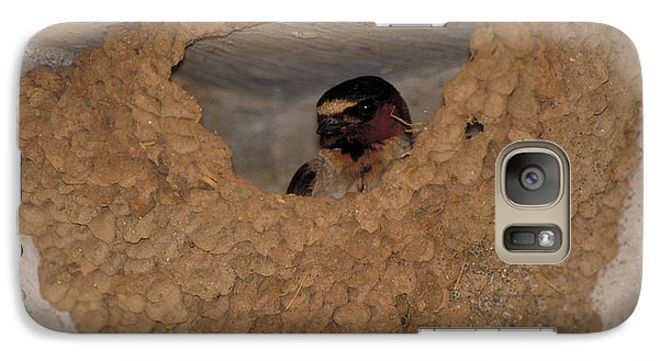 Cliff Swallows Galaxy S7 Case