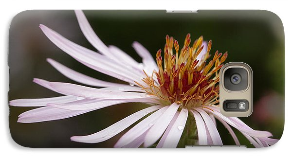 Galaxy Case featuring the photograph Climbing Aster by Paul Rebmann