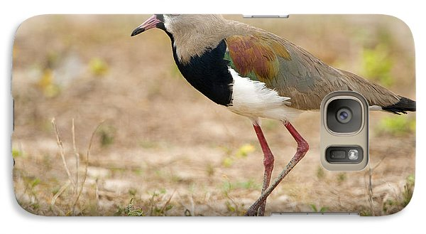Close-up Of A Southern Lapwing Vanellus Galaxy Case by Panoramic Images