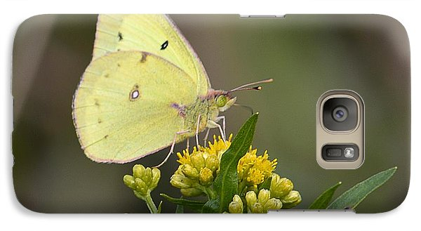 Galaxy Case featuring the photograph Clouded Sulphur by Randy Bodkins