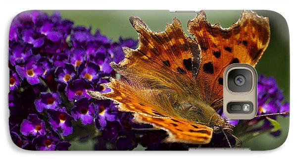Galaxy Case featuring the photograph Comma Butterfly On Buddleia by Shirley Mitchell