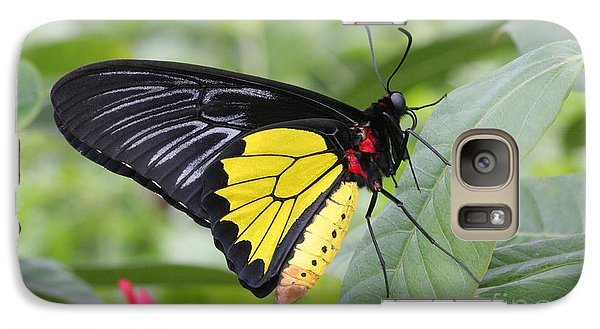Galaxy Case featuring the photograph Common Birdwing Butterfly by Judy Whitton