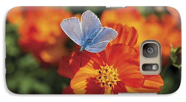 Galaxy Case featuring the photograph Common Blue Butterfly by Lana Enderle