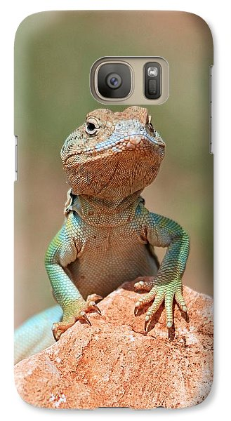 Galaxy Case featuring the photograph Common Collared Lizard 2 by Elizabeth Budd