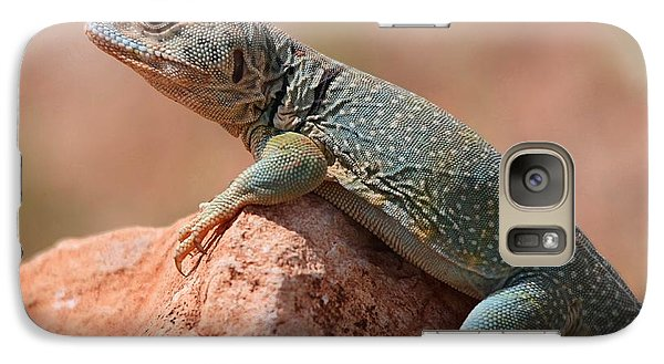 Galaxy Case featuring the photograph Common Collared Lizard by Elizabeth Budd