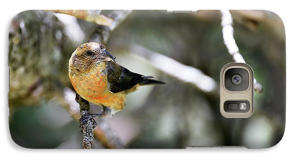 Common Crossbill Female Galaxy Case by Dr P. Marazzi