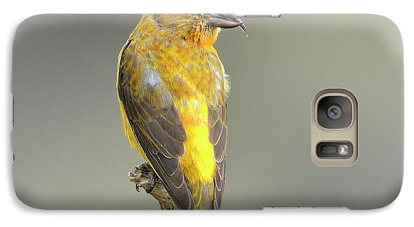 Crossbill Galaxy S7 Case - Common Crossbill Loxia Curvirostra by Rhz