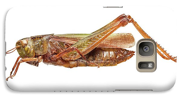 Grasshopper Galaxy S7 Case - Common Green Grasshopper by Natural History Museum, London