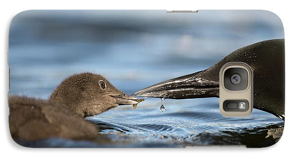 Loon Galaxy S7 Case - Common Loon Feeding Chick by Dr P. Marazzi