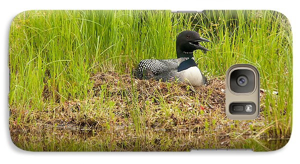 Galaxy Case featuring the photograph Common Loon Nesting by Brenda Jacobs