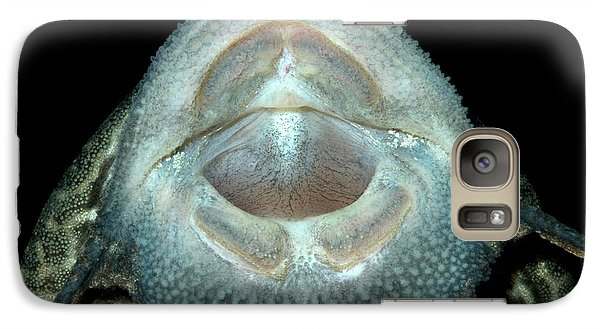 Common Pleco Or Suckermouth Catfish Galaxy S7 Case by Nigel Downer