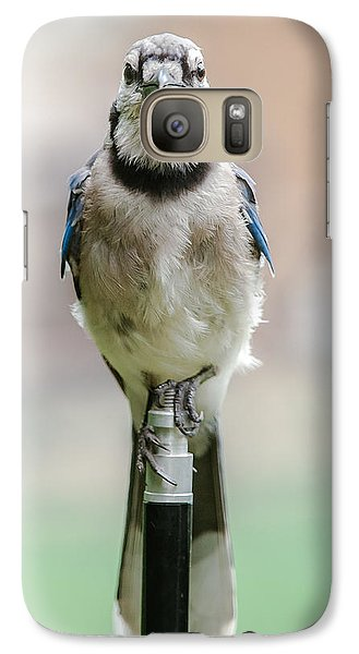 Galaxy Case featuring the photograph Contemplative Blue Jay by Jim Moore