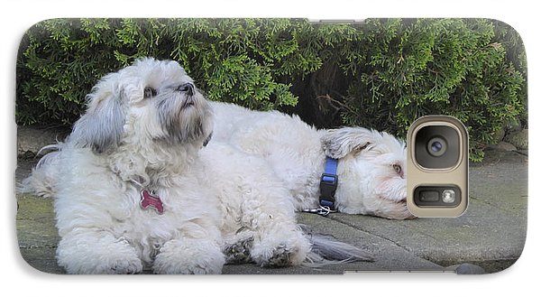 Galaxy Case featuring the photograph Havanese Dog Sisters B by Laurie Tsemak