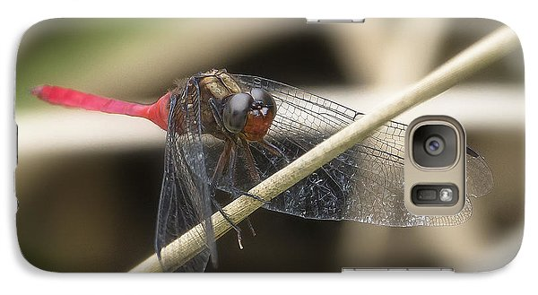 Galaxy Case featuring the photograph Cool Dragon Fly 0001 by Kevin Chippindall