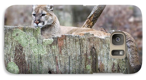 Cougar On A Stump Galaxy S7 Case