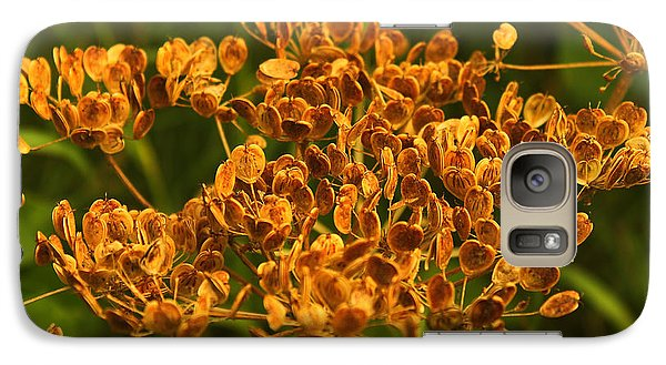 Galaxy Case featuring the photograph Cow Parsnip Seeds by Sandra Foster