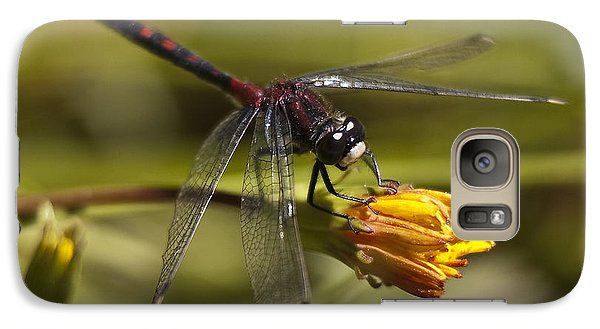 Galaxy Case featuring the photograph Crimson-ringed  White Face Dragonfly On Flower by Lee Kirchhevel