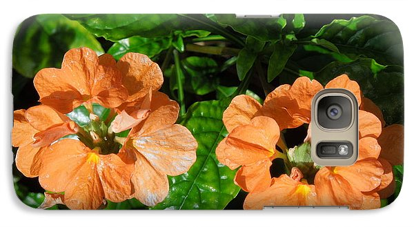 Galaxy Case featuring the photograph Crossandra by Ron Davidson