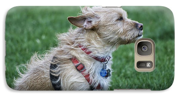 Galaxy Case featuring the photograph Cruz Enjoying A Warm Gentle Breeze by Thomas Woolworth