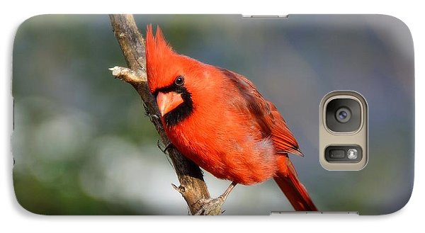 Galaxy Case featuring the photograph Curious Cardinal by Lisa L Silva