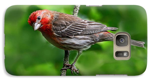 Galaxy Case featuring the photograph Curious Purple Finch by Rodney Campbell