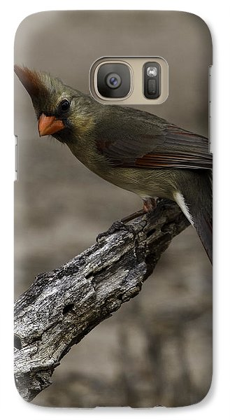 Curious Pyrrhuloxia Galaxy S7 Case