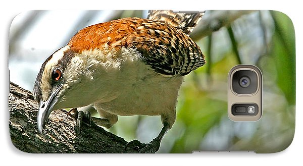 Galaxy Case featuring the photograph Curious Rufous-naped Wren by Peggy Collins