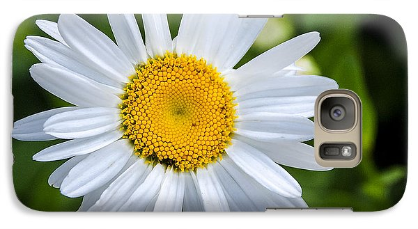 Galaxy Case featuring the photograph Daisy by Phil Abrams