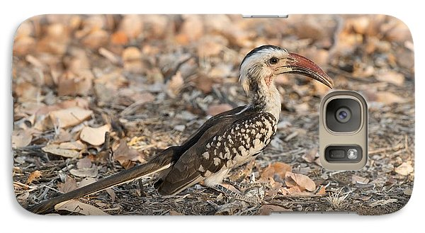 Damara Red-billed Hornbill Foraging Galaxy S7 Case by Tony Camacho