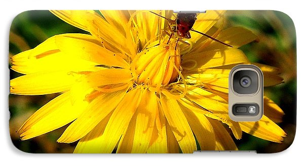 Galaxy Case featuring the photograph Dandelion And Bug by Pete Trenholm
