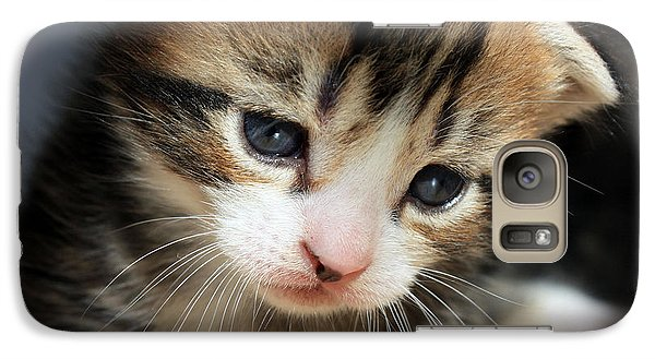 Galaxy Case featuring the photograph Daydreamer Kitten by Terri Waters