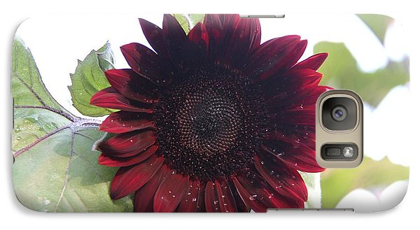 Galaxy Case featuring the photograph Deep Red Sunflower by Yumi Johnson