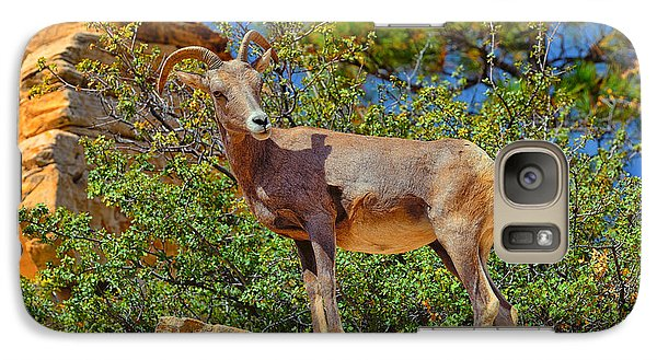 Galaxy Case featuring the photograph Desert Bighorn Sheep by Greg Norrell