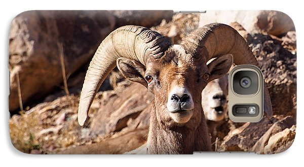 Desert Bighorn Sheep Galaxy S7 Case
