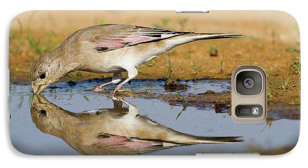 Desert Finch (carduelis Obsoleta) Galaxy S7 Case by Photostock-israel