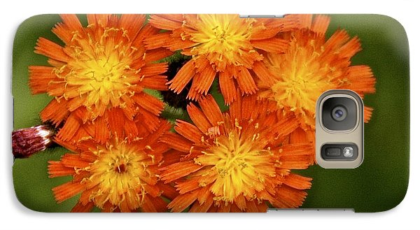 Galaxy Case featuring the photograph Devils Paint Brush by Susan Crossman Buscho