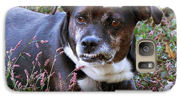 Galaxy Case featuring the photograph Dogg by Bonnie Willis