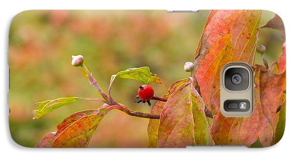 Galaxy Case featuring the photograph Dogwood Berrie by Nick Kirby