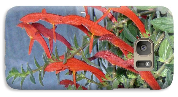 Galaxy Case featuring the photograph Dolphin Plant by Brenda Brown
