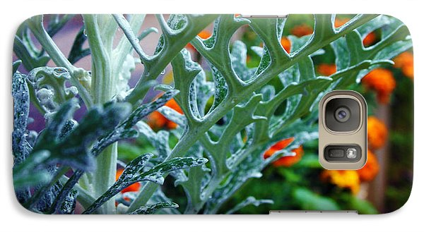 Galaxy Case featuring the photograph Dusty Miller And Dew Drops by Deborah Fay