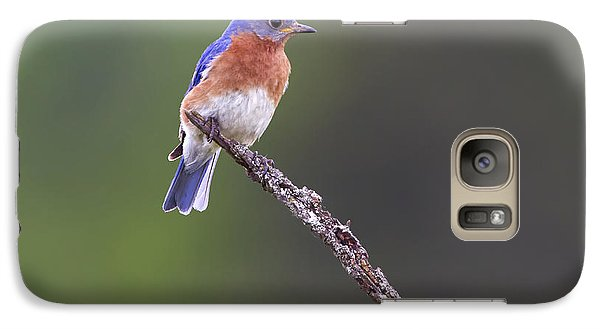 Galaxy Case featuring the photograph Eastern Bluebird by Gary Hall