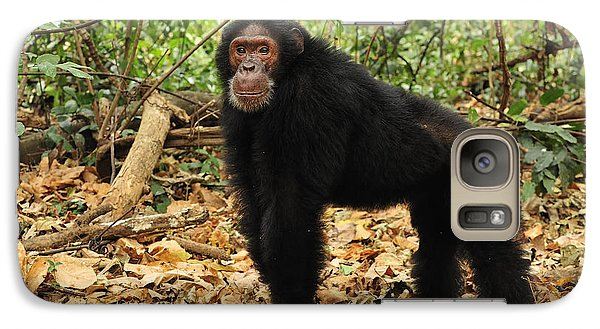 Eastern Chimpanzee Gombe Stream Np Galaxy S7 Case