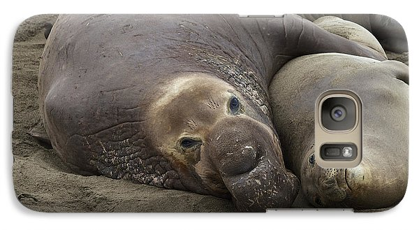 Galaxy Case featuring the photograph Elephant Seal Couple by Duncan Selby