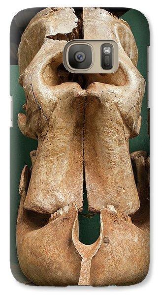 Elephant Skull Cyclops Fossil Myth Galaxy S7 Case by Paul D Stewart