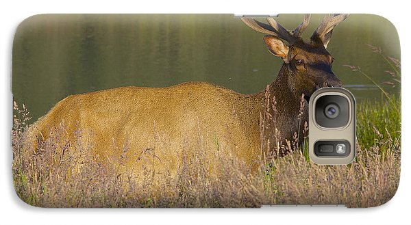 Galaxy Case featuring the photograph Elk At Dusk by Todd Kreuter