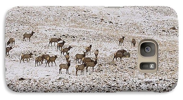 Galaxy Case featuring the photograph Elk In Snow Panorama 14x47 by J L Woody Wooden